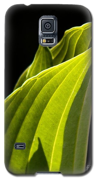 New Hosta Galaxy S5 Case