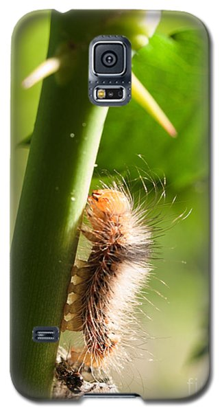New Life Is Born Galaxy S5 Case