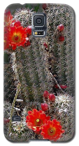 New Mexico Cactus Galaxy S5 Case