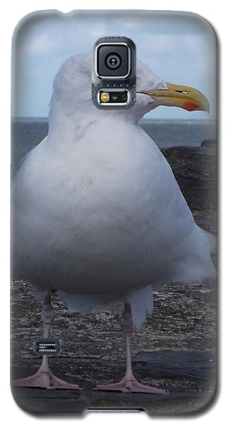 New Quay Gull  Galaxy S5 Case by John Williams