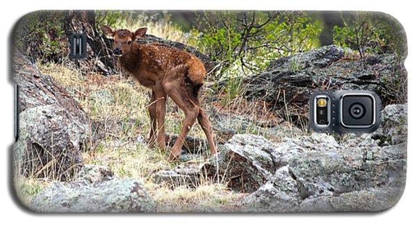 Newborn Elk Calf Galaxy S5 Case