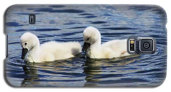 Newborn Mute Swans Galaxy S5 Case