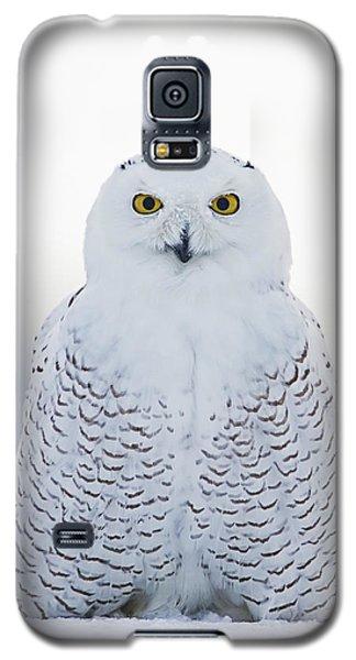 Nh Seacoast Snowy Owl  Galaxy S5 Case