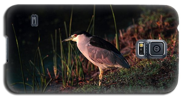 Galaxy S5 Case featuring the photograph Night Heron  by Duncan Selby