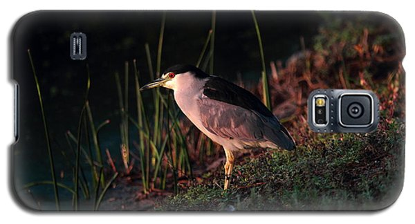 Night Heron  Galaxy S5 Case by Duncan Selby