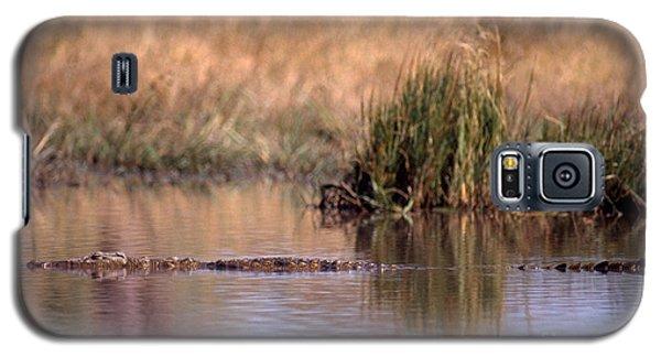 Nile Crocodile Galaxy S5 Case by Gregory G. Dimijian, M.D.