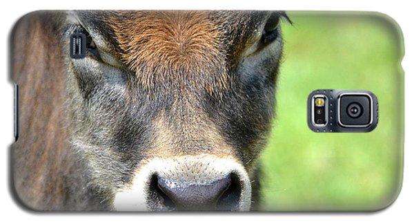No Bull Galaxy S5 Case by Deena Stoddard