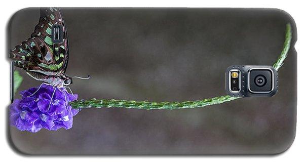 Butterfly - Tailed Jay II Galaxy S5 Case