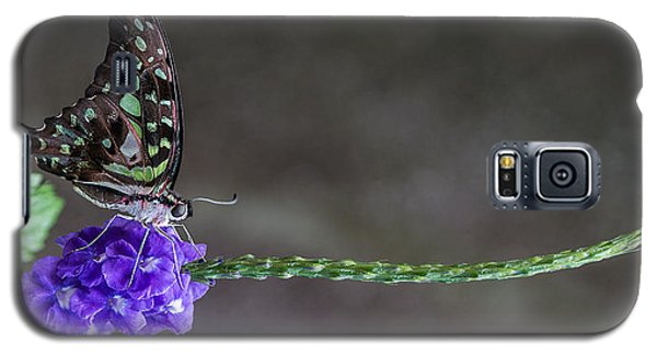 Butterfly - Tailed Jay II Galaxy S5 Case