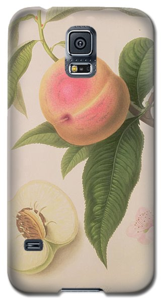 Noblesse Peach Galaxy S5 Case by William Hooker