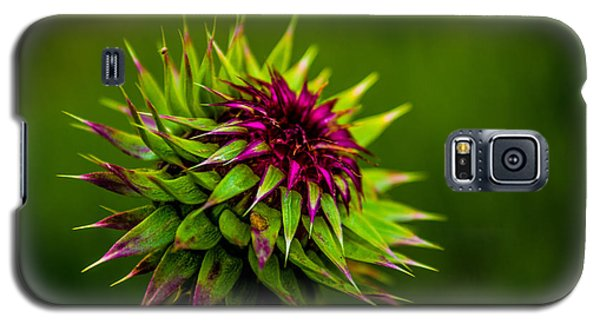 Galaxy S5 Case featuring the photograph Nodding Spines by Rhys Arithson