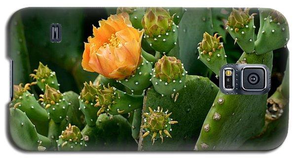 Nopal 1 Galaxy S5 Case by Ricardo J Ruiz de Porras