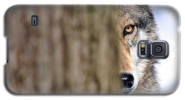 North American Gray Wolf Behind Tree Galaxy S5 Case