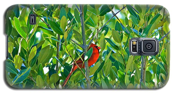 Galaxy S5 Case featuring the photograph Northern Cardinal Hiding Among Green Leaves by Cyril Maza