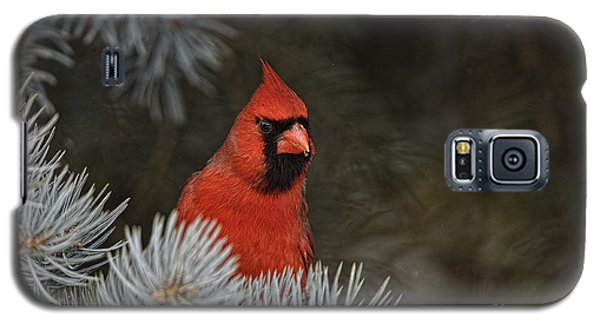 Northern Cardinal In Spruce Tree Galaxy S5 Case