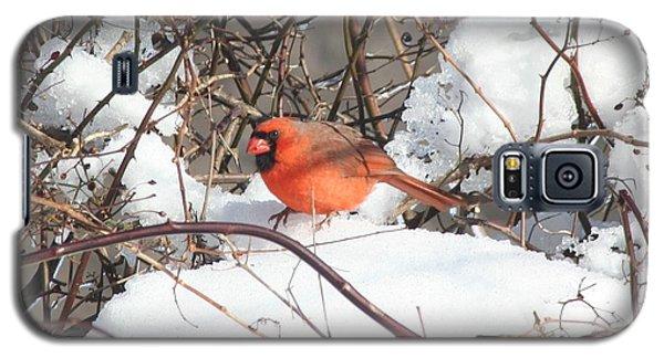 Northern Cardinal Galaxy S5 Case by Karen Silvestri