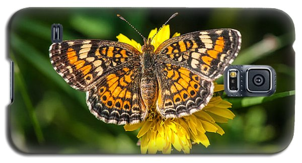 Northern Crescent Butterfly Galaxy S5 Case