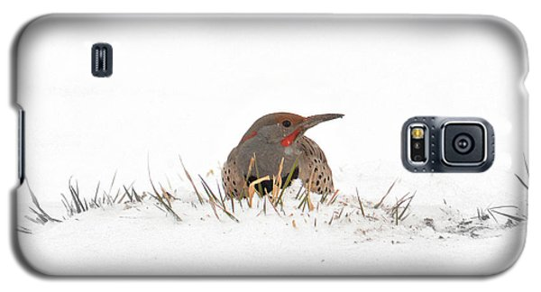 Galaxy S5 Case featuring the photograph Northern Flicker by Al  Swasey