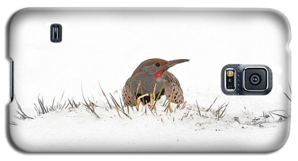 Northern Flicker Galaxy S5 Case