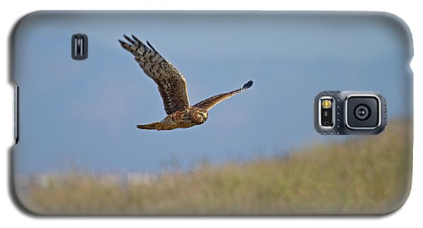 Galaxy S5 Case featuring the photograph Northern Harrier In Flight by Duncan Selby