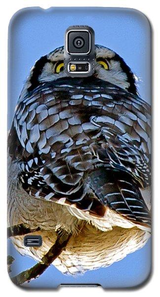 Northern Hawk Owl Looks Around Galaxy S5 Case