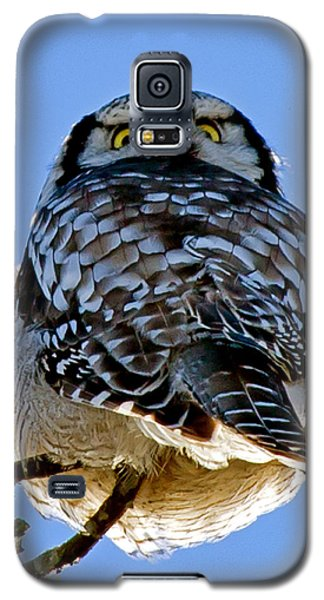 Northern Hawk Owl Looks Around Galaxy S5 Case by Torbjorn Swenelius