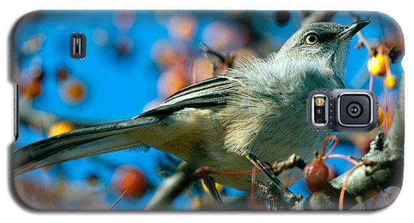 Mockingbird Galaxy S5 Case - Northern Mockingbird by Bob Orsillo