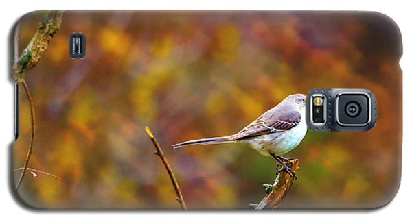 Galaxy S5 Case featuring the photograph Northern Mockingbird by Deena Stoddard