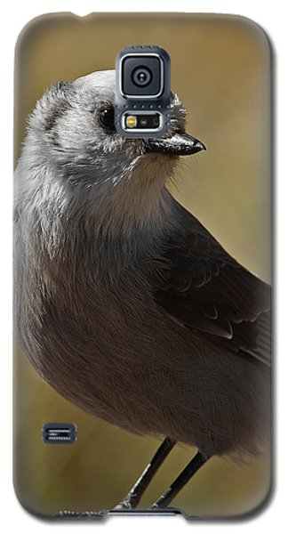 Northern Mockingbird Galaxy S5 Case by Ernie Echols