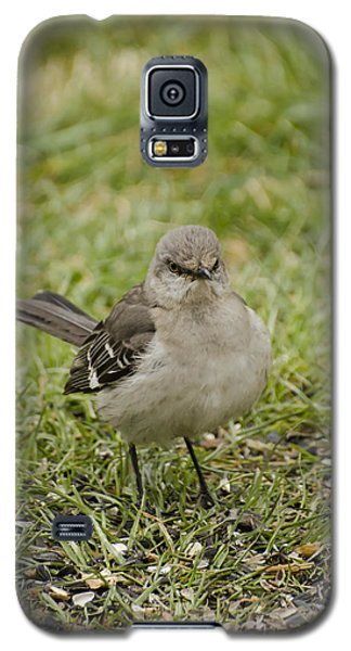 Northern Mockingbird Galaxy S5 Case by Heather Applegate