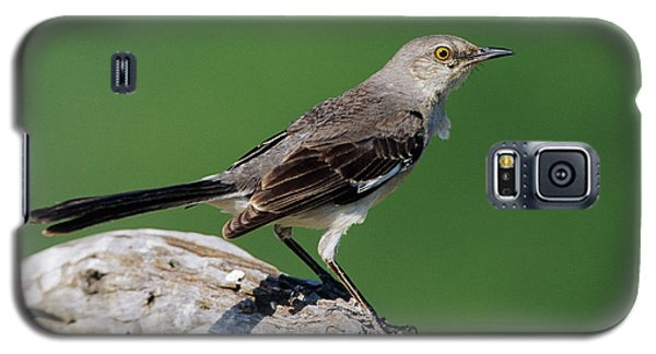 Mockingbird Galaxy S5 Case - Northern Mockingbird (mimus Polyglottos by Richard and Susan Day