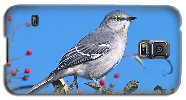 Northern Mockingbird Galaxy S5 Case by Paul J. Fusco