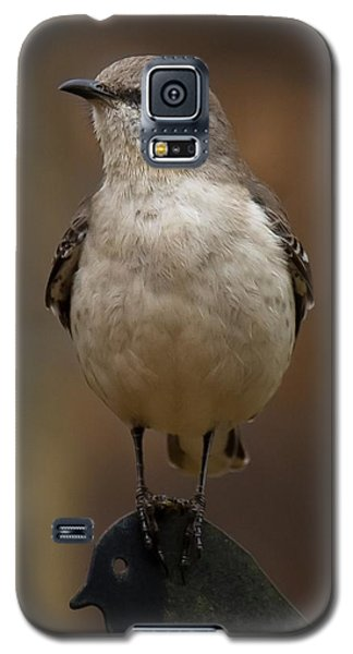 Northern Mockingbird Galaxy S5 Case