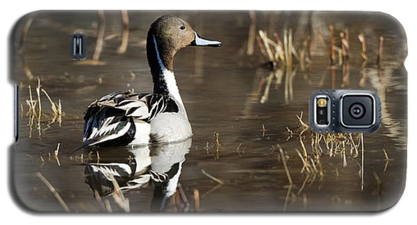 Handsome Northern Pintail Galaxy S5 Case