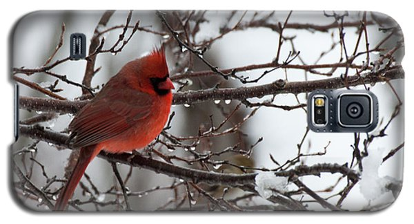 Northern Red Cardinal In Winter Galaxy S5 Case