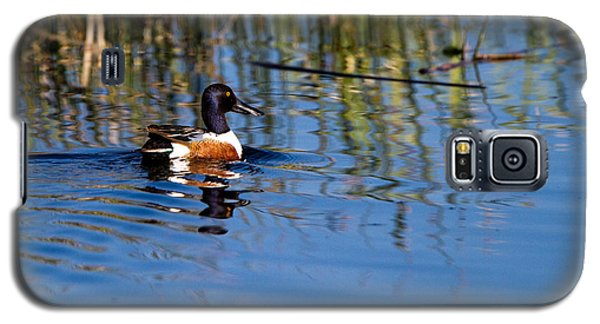 Northern Shoveler Drake Galaxy S5 Case