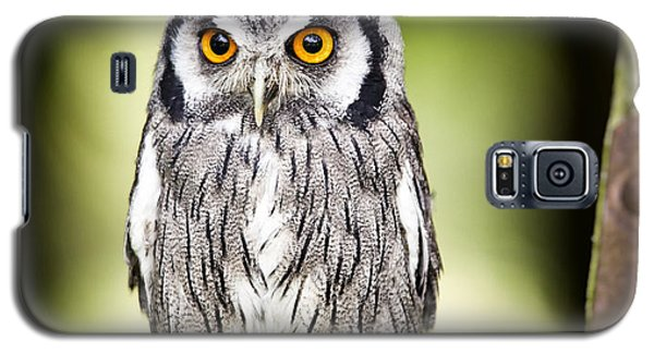 Northern White Faced Owl Galaxy S5 Case by Ian Merton
