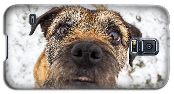 Nosey Dog. Galaxy S5 Case