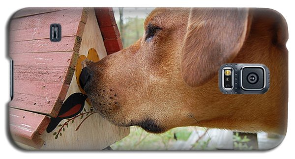 Galaxy S5 Case featuring the photograph Nosey by Mim White