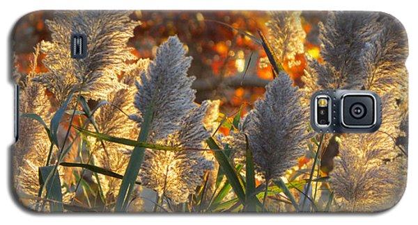 November Lights Galaxy S5 Case by Dianne Cowen