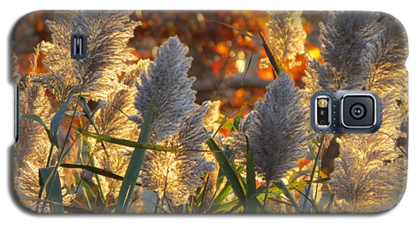 Galaxy S5 Case featuring the photograph November Lights by Dianne Cowen