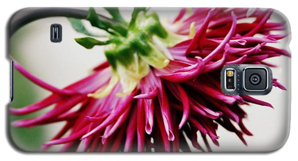 Galaxy S5 Case featuring the photograph November Love by Geri Glavis