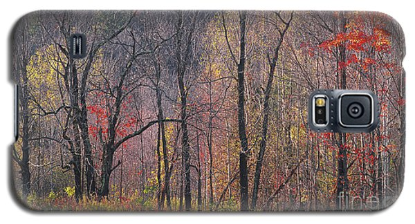 November Woods Galaxy S5 Case