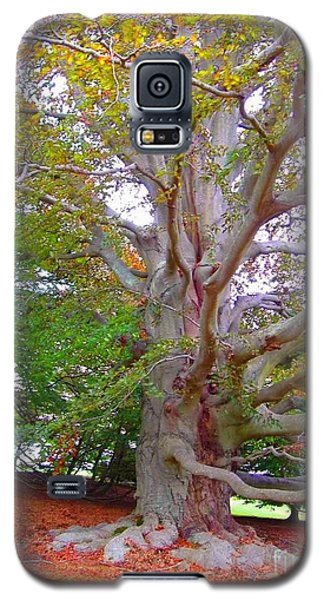 Galaxy S5 Case featuring the photograph Now This Is A Tree by Becky Lupe