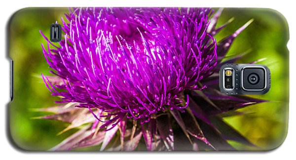 Galaxy S5 Case featuring the photograph Nutans Nuance by Rhys Arithson