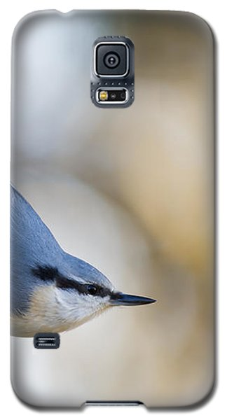 Nuthatch In The Classical Position Galaxy S5 Case