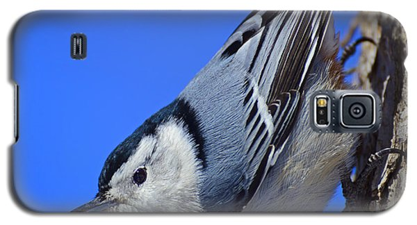 Nuthatch Galaxy S5 Case