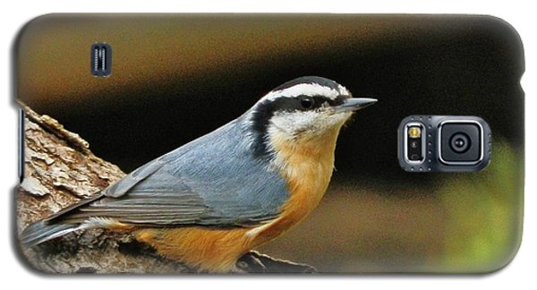 Galaxy S5 Case featuring the photograph Nuthatch Pose by VLee Watson
