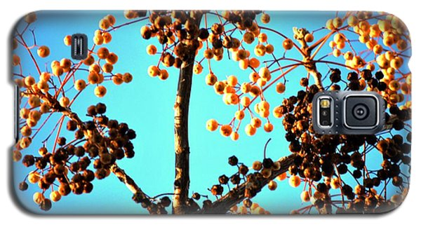 Galaxy S5 Case featuring the photograph Nuts And Berries by Matt Harang