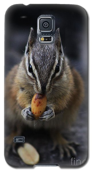Nuts Galaxy S5 Case